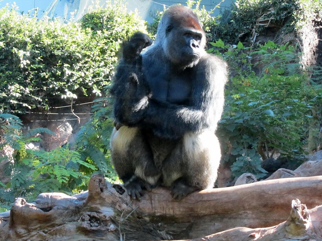 loro parque   tenerife zoo