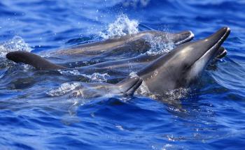 Crocera 3 isole - Barca con vista sottomarina a Fuerteventura