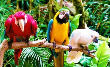 Oasis Park Fuerteventura - Zoo e giardino botanico