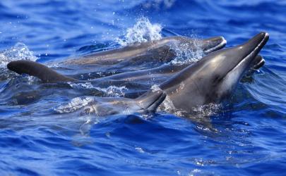 3 Islands Glass Bottom Boat Cruise Fuerteventura